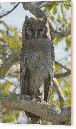 Verreauxs Eagle Owl, Bubo Lacteus, Or Wood Print by Paul Sutherland