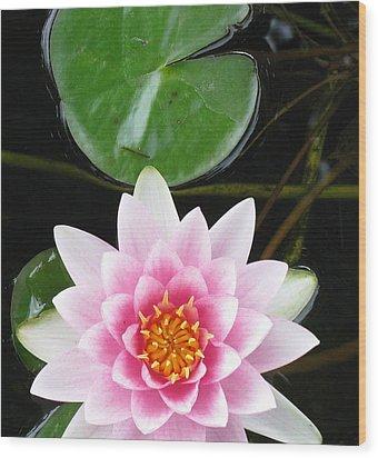 Vertical Water Lily Wood Print by Debbie Finley