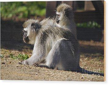 Vervet Monkeys  Wood Print by Alexandra Jordankova