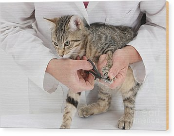 Vet Clipping Kittens Claws Wood Print by Mark Taylor