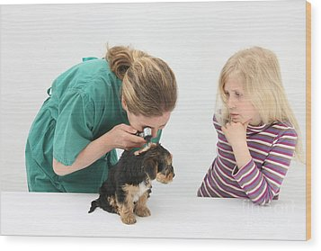 Vet Using An Otoscope To Examine A Pups Wood Print by Mark Taylor