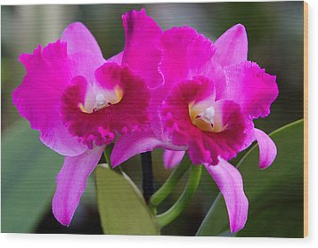 Vibrant Violet Orchids Wood Print by Linda Phelps
