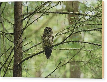 View Of A Northern Spotted Owl Wood Print by James P. Blair