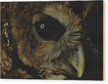 View Of A Northern Spotted Owl Strix Wood Print by Joel Sartore