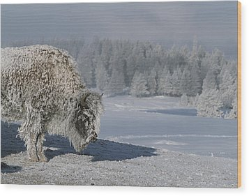 View Of An Ice-encrusted American Bison Wood Print by Tom Murphy