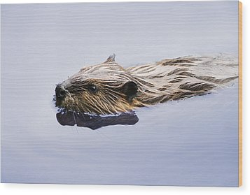 View Of Beaver, Chaudiere-appalaches Wood Print by Yves Marcoux