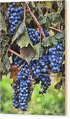 Vines And Clusters Wood Print by Randy Wehner Photography