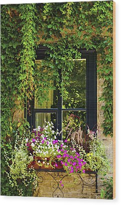 Vines Growing On A Wall And Flowers Wood Print by David Chapman