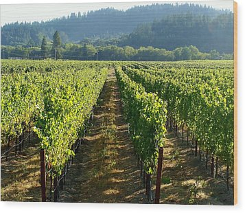 Vineyard At Harvest Wood Print by Kathleen Fitzpatrick
