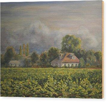 Vineyard Fog Santa Rosa Wood Print by Edward White