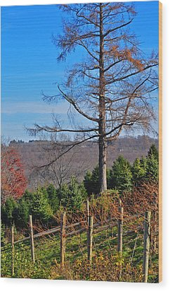 Vineyard In Fall Wood Print by Peter  McIntosh