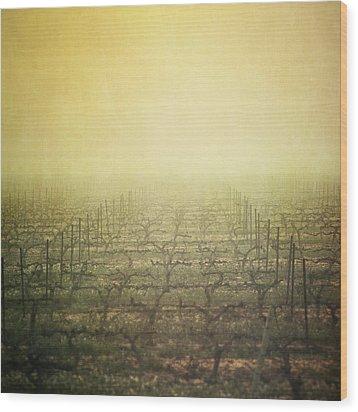 Vineyard In Mist Wood Print by Paul Grand Image