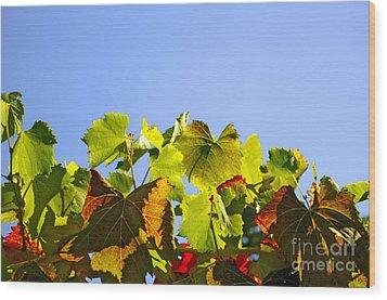 Vineyard Leaves Wood Print by Carlos Caetano