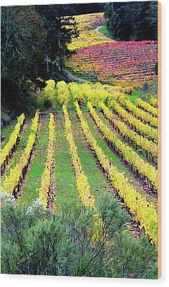 Vineyard Sonoma 7 Wood Print by Anthony George