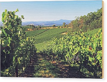 Vineyards In The Yarra Valley, Victoria, Australia Wood Print by Peter Walton Photography