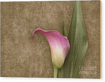Wood Print featuring the photograph Vintage Calla Lily by Cheryl Davis