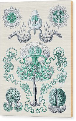 Vintage Jellyfish Wood Print by Patruschka Hetterschij