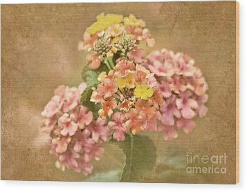 Wood Print featuring the photograph Vintage Lantana by Cheryl Davis
