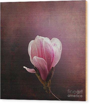 Vintage Magnolia Wood Print by Jane Rix