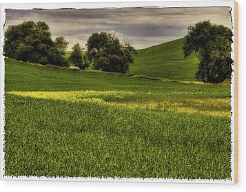 Vintage Palouse Country Wood Print by David Patterson
