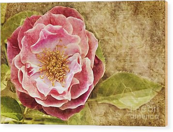 Wood Print featuring the photograph Vintage Rose by Cheryl Davis