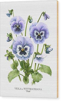 Viola Pansies Wood Print