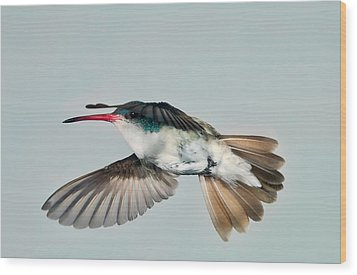 Wood Print featuring the photograph Violet Crowned Hummingbird In Level Flight by Gregory Scott
