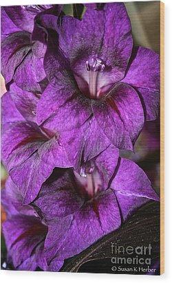 Violet Glads Wood Print by Susan Herber
