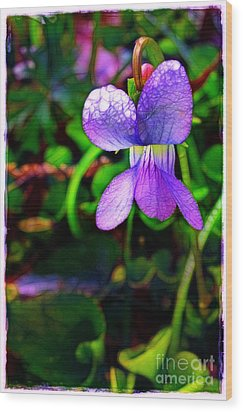 Violet With Dew Wood Print by Judi Bagwell