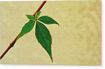 Virginia Creeper Wood Print by Laura DAddona