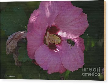 Wood Print featuring the photograph Visiting Bee by Tannis  Baldwin