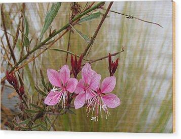 Visiting The Pink Guara Wood Print by Bonnie Muir