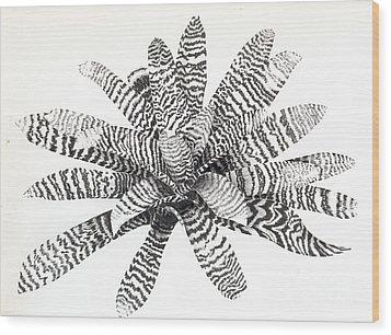 Vriesea Hieroglyphica Wood Print