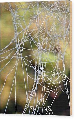 Wood Print featuring the photograph Wacky Winter Web by Paula Tohline Calhoun