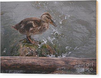 Wading Wood Print