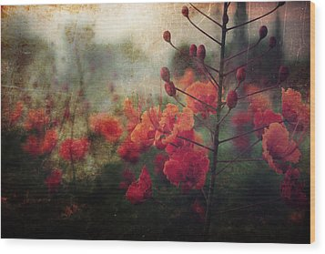 Waiting For Better Days Wood Print by Laurie Search
