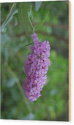 Waiting On Butterflies Wood Print by Beverly Hammond