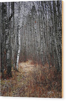 Wood Print featuring the photograph Walk In The Forest by Blair Wainman