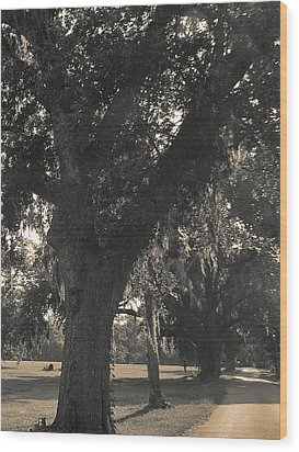 Wood Print featuring the photograph Walk Through The Oaks by Brian Wright