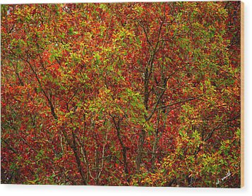 Wall Of Red Wood Print by Ed Smith