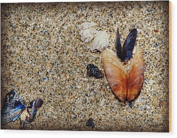 Washed Up Wood Print by Lisa Knechtel