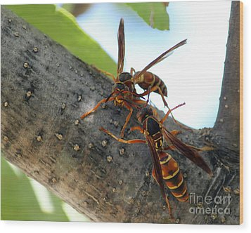 Wasp Fight Wood Print by Billie-Jo Miller