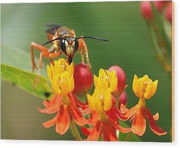 Wasp Wood Print by Kathy Gibbons