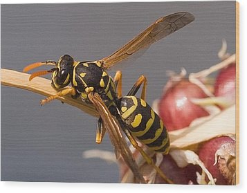 Wasp On Garlic Wood Print