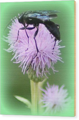 Wasp On Lavender Wildflower  Wood Print by Maureen  McDonald