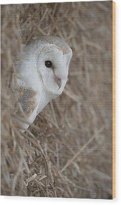 Watchfull Barn Owl Wood Print