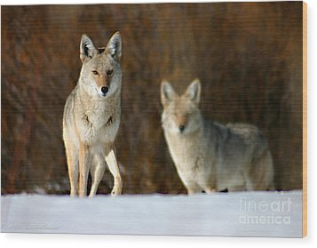 Wood Print featuring the photograph Watching by Mitch Shindelbower
