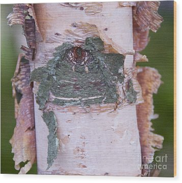 Wood Print featuring the photograph Watching You by Cindy Lee Longhini