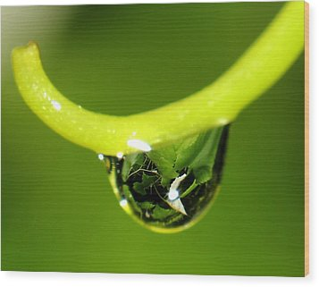 Water Droplet On Grapevine Wood Print