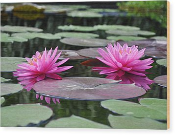 Water Lilies Wood Print by Bill Cannon